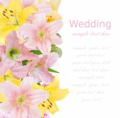 Lily flowers background isolated on white with sample text — Stock Photo