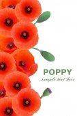 Red poppy flowers background isolated on white with sample text — Stock Photo