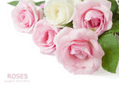 Rose bunch isolated on white background — Stock Photo