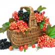 Basket with berries close up on white background — Stock Photo