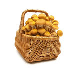 Fresh mushrooms in a wicker basket isolated on white background — Stock Photo