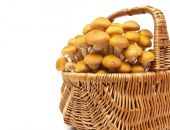 Mushrooms in a basket on a white background close-up — Stock Photo