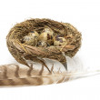 Quail eggs in the nest and bird feather isolated on white backgr — Stock Photo #62550475
