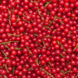 Ripe juicy red currant berries — Stock Photo #64287849