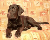 Puppy chocolate Labrador Retriever (age 5,0 months) lying on the — Stockfoto