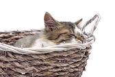 Kitten sleeps in a wicker basket on a white background — Stock Photo