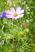 Květinová louka — Stock fotografie