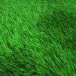 Field sown with grass, the grass swaying in the wind — Stock Video #77337142