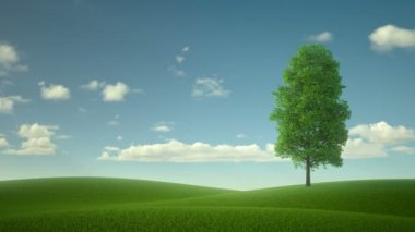 Lonely tree in the middle of the field. the fabulous landscape — Stock Video