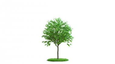 Tree growth on a round green grass. Ideal isolation.  On white and black background with black and white mask. — Stock Video