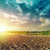 Sunset over black field after harvesting — Stock Photo