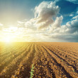 Sunset in clouds and plowed field — Stock Photo #53014483