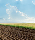 Agricultural fields and cloud in blue sky — Stok fotoğraf
