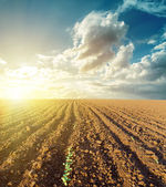 Sunset in clouds and plowed field — Stok fotoğraf
