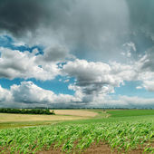 Dramatic sky over green field. rain before — Stock Photo