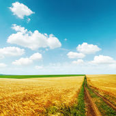Road in golden field with harvest under blue sky with clouds — Stock Photo