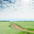 Cloudy sky over green field in spring and road — Stock Photo #63471741