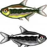 Neon Tetra aquarium fish — Stock Vector #62023929