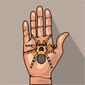 Tarantula in a hand — Stock Vector
