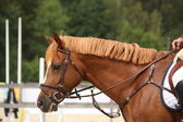 Brown horse portrait with bridle — Stock Photo