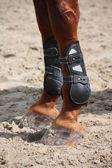 Chestnut horse legs close up with splint boots — Stock Photo