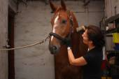 Mujer morena caballo marrón la preparación para el montar a caballo — Foto de Stock