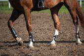 Close up of horse legs with protection boots — Stock Photo