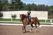 Beautiful brunette woman riding (trotting) chestnut horse — Stock Photo