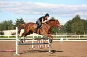 Donna bruna salto sul cavallo marrone — Foto Stock