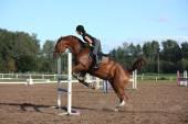 茶色の馬に乗ってブルネットの女性のショーの跳躍 — ストック写真