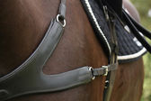 Close up of leather equine breastplate — Stock Photo
