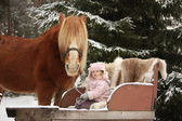 Cute little girl sitting in the sledges and big palomino draught — Stock Photo