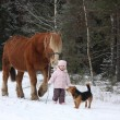 Cute little girl leading big draught horse in winter — Stock Photo #61313843