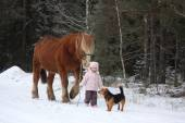 Cute little girl leading big draught horse in winter — Stock Photo