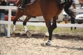Cantering horse legs close up — Stock Photo