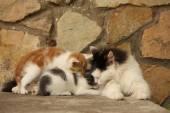 Mamá Gato y sus gatitos descansando juntos — Foto de Stock