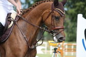 Brown horse portrait during competition — Stock Photo