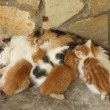 Mother cat and her kittens resting together — Stock Photo #65277473