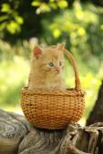 Adorable ginger kitten sitting in the basket — Stock Photo