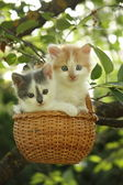 Two kittens sitting in the basket hanging on the tree — Stock Photo