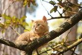 Cute small kitten climbing the tree — Stock Photo