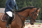Portrait of sport brown horse in tack — Stock Photo