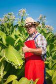 Farmer on the tobacco field — Stock Photo