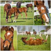 Verzameling van paarden foto 's — Stockfoto