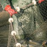 Fisherman at Work — Stock Photo #60122127