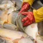 Fisherman at Work — Stock Photo #60124907
