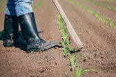 Manual labor in agriculture — Stock Photo