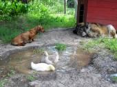 Friendship of animals. — Stock Photo