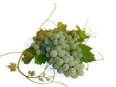 Cluster of green grapes on a white background, macro (still life). — Stock Photo