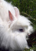 White decorative rabbit close up. — Stock Photo
